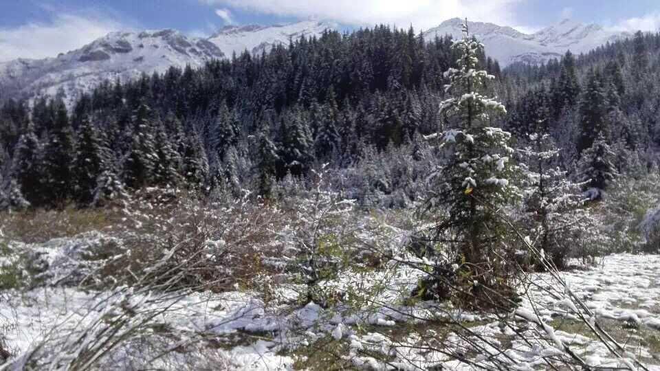 意外惊喜!黄龙川主寺喜迎降雪啦~